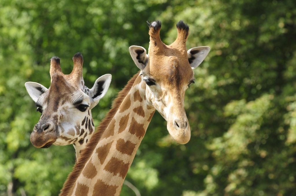 Wildlife Safari Excursion
